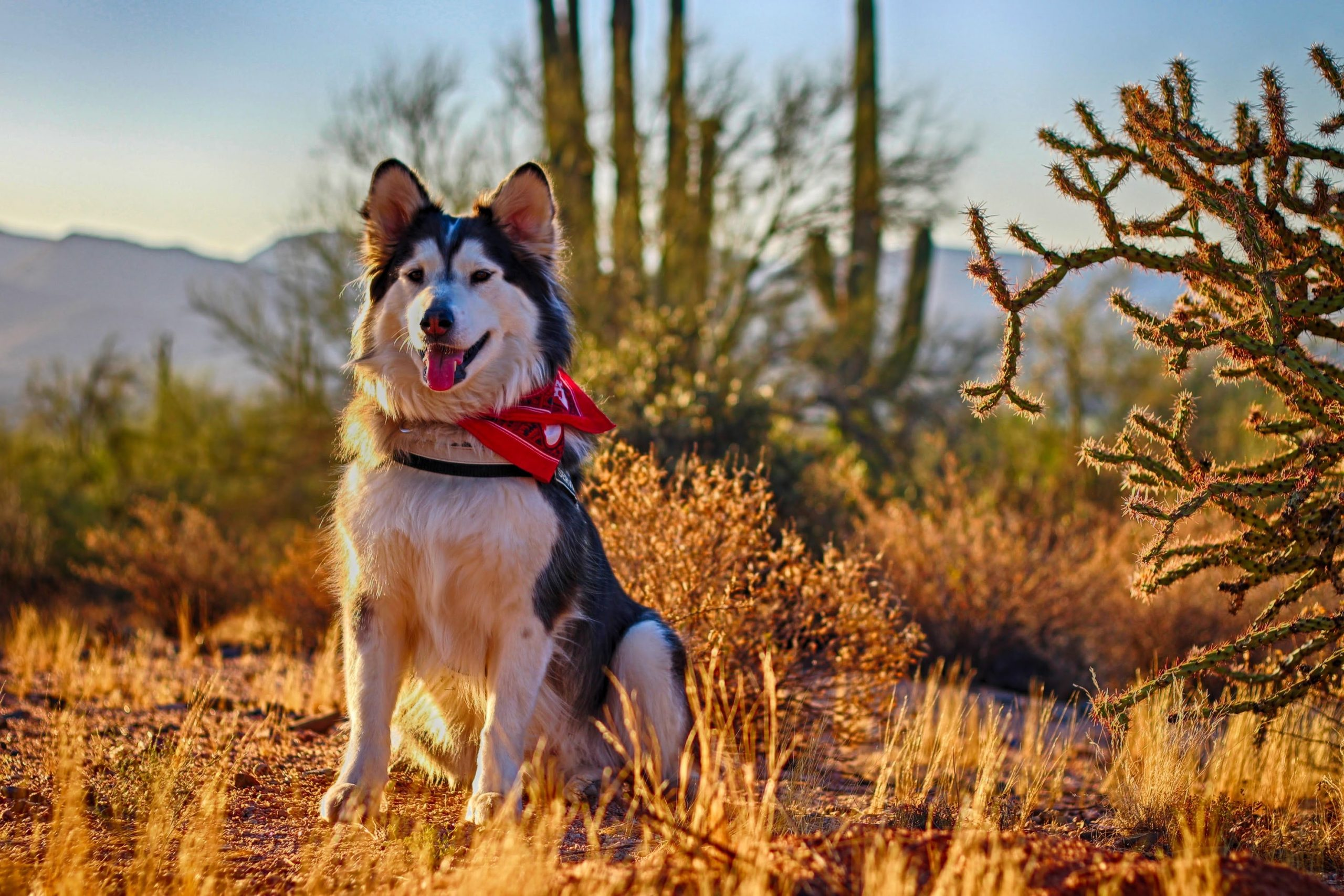 dog sitting in a desert scene