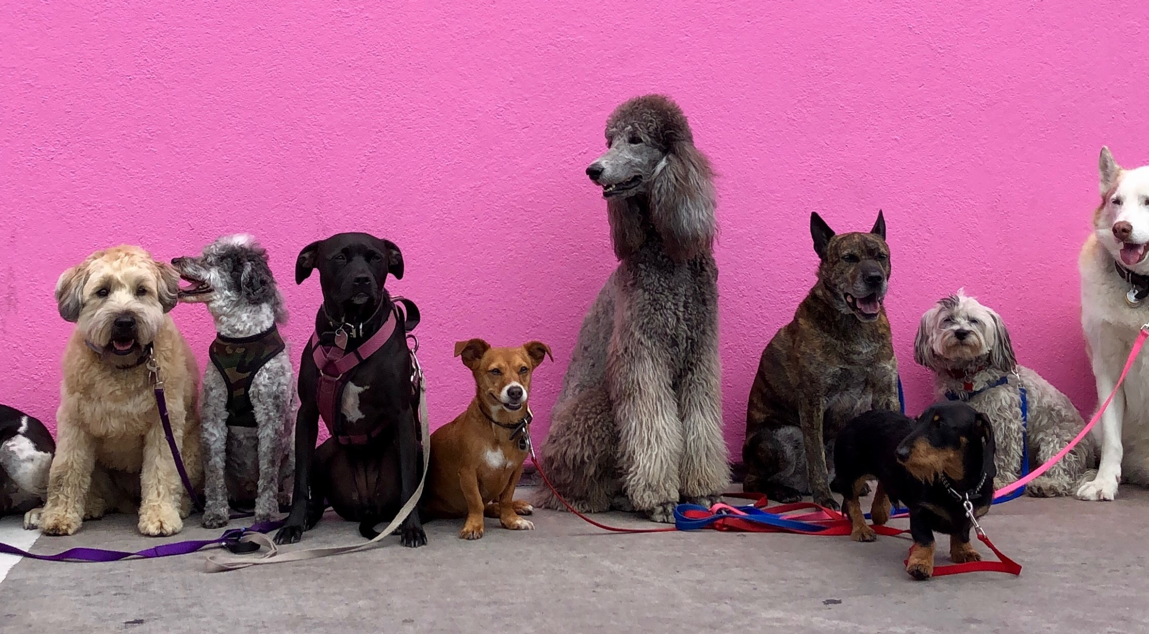 dogs standing in a line