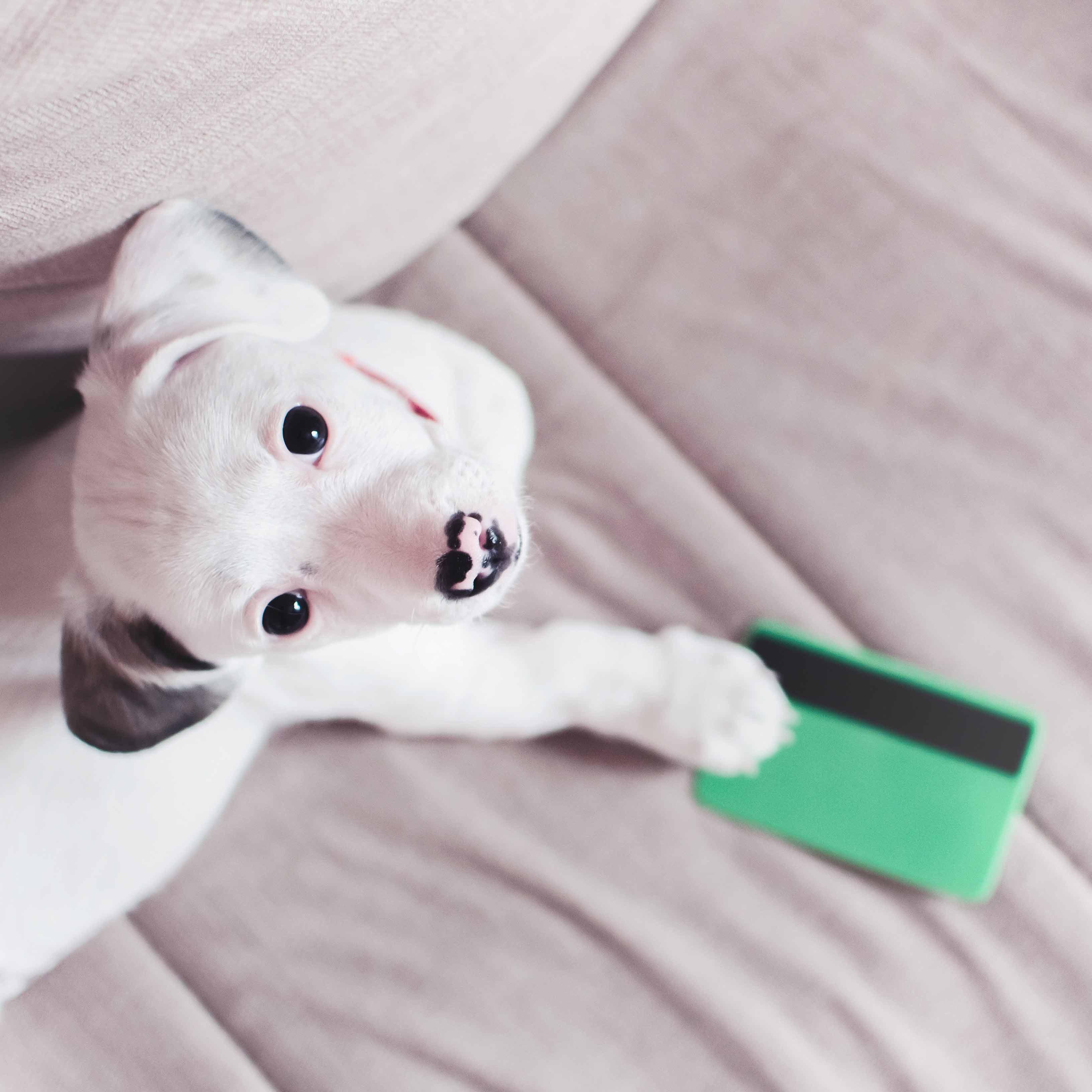 Financing Puppies Animal Kingdom Arizona