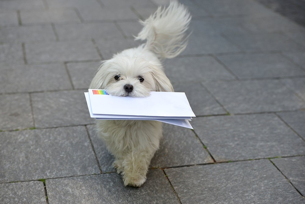 Press Releases Puppies Animal Kingdom Arizona