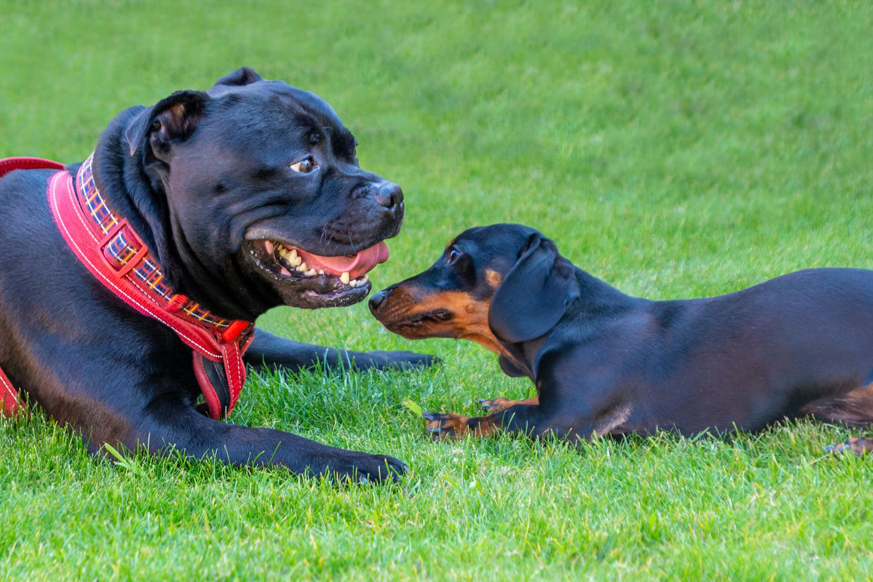 2 dogs playing together