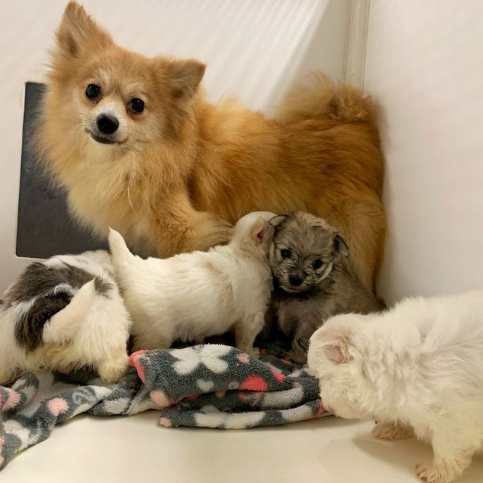 Mama with her puppies