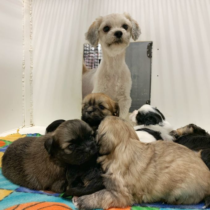 Adult dog checks on her puppies