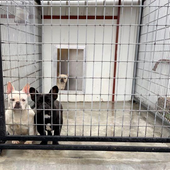 Indoor/Outdoor Kennels