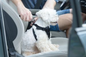Plan Road Trip With Your Dog
