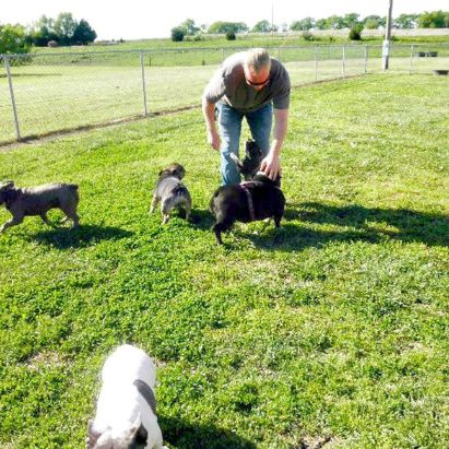 Puppies 'N Love & Animal Kingdom owner Frank Mineo Jr. playing with dogs in open yard