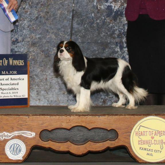 Award-winning Canines
