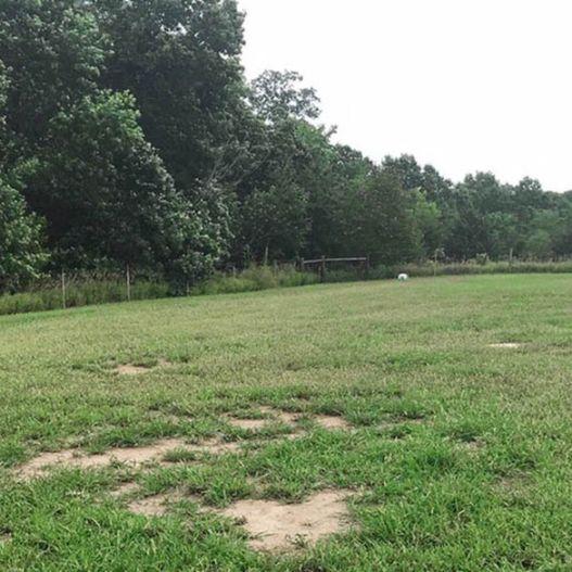 Grassy Play Area