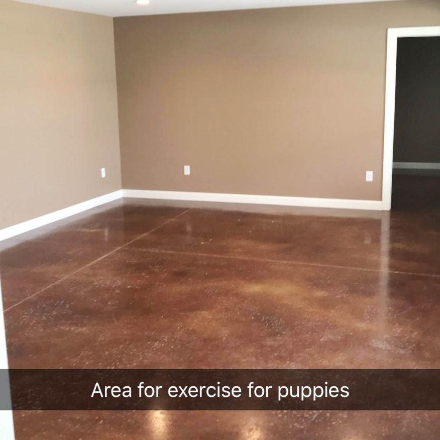Puppy Exercise Room