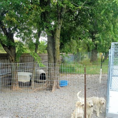 Jennife's dogs enjoy indoor and outdoor kennels