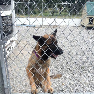 Jennifer's dogs enjoy indoor/outdoor kennels and dog houses