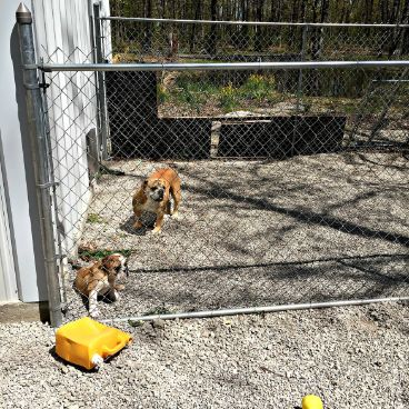Judy's dogs have a lot of outdoor space in which to run around and play