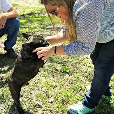 Michelle L. playing with adult French Bulldog