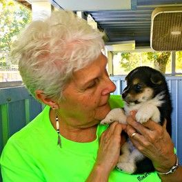 Kennel owner, Judy, cuddles one of her Newfoundland puppies