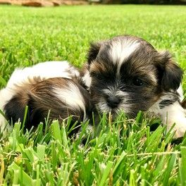 More cute puppies!