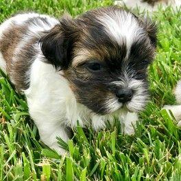 Puppy in field