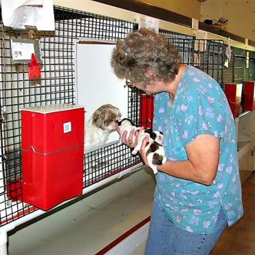 Whelping room at Mary's kennel