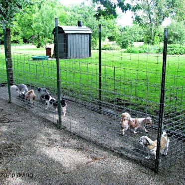 Dogs in outdoor kennel