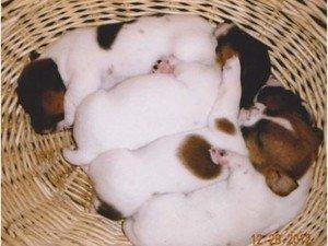 Mary & Tim Feldmann Puppies Animal Kingdom Arizona