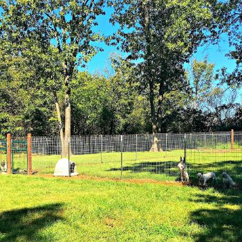 Outdoor play yards