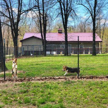 Another view of indoor/outdoor kennels