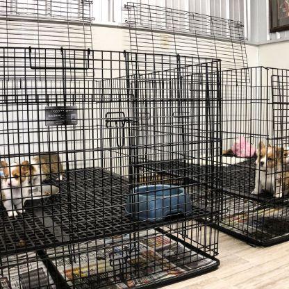 Indoor puppy kennels