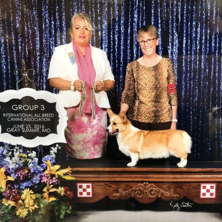 Pam shows her dogs and they are prize winning