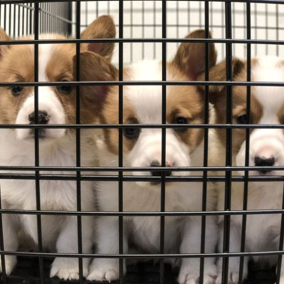 Puppies in their kennel