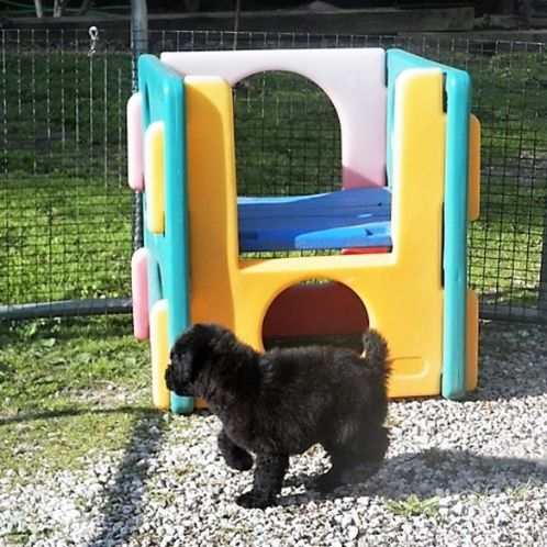 Outdoor play yard for dogs