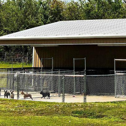 Exterior of side 1 of indoor/outdoor kennel