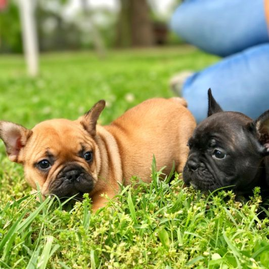Puppies playing in field