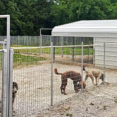 Stacie's Indoor/Outdoor Kennels