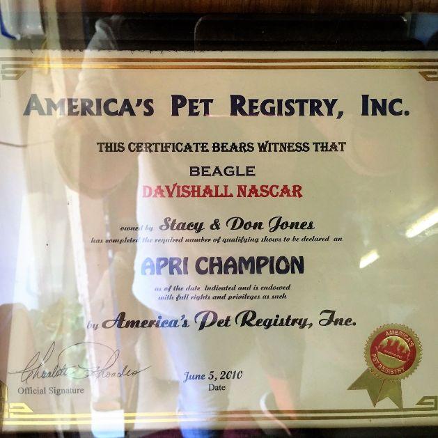 Stacy breeds award winning dogs