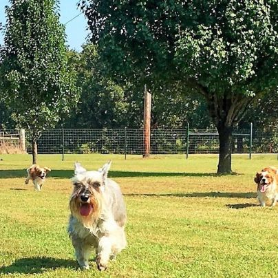 Adult dogs have huge enclosed areas to exercise