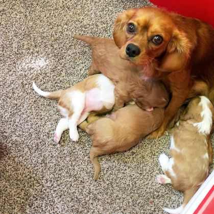 Mom inside with her puppies