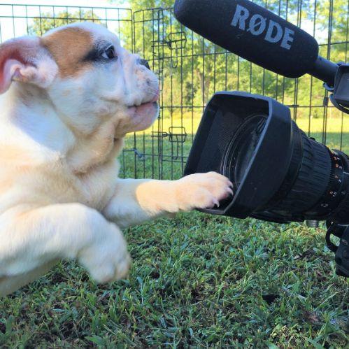 Susie's bulldog loves the camera