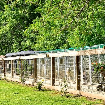 Spacious Dog Kennels