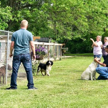 Vickie\'s Kennels and Dogs