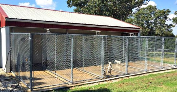 Some of Carolyn's indoor/outdoor kennels