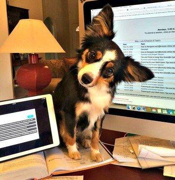 dog sitting on a desk