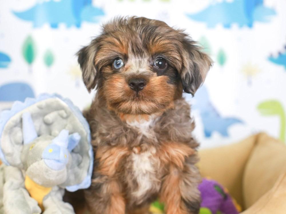 Sharrie Ogle Puppies Animal Kingdom Arizona