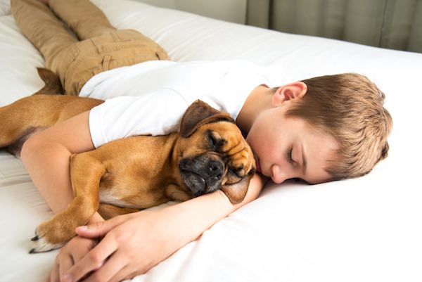 A boy sleeping with his dog on a bed.
