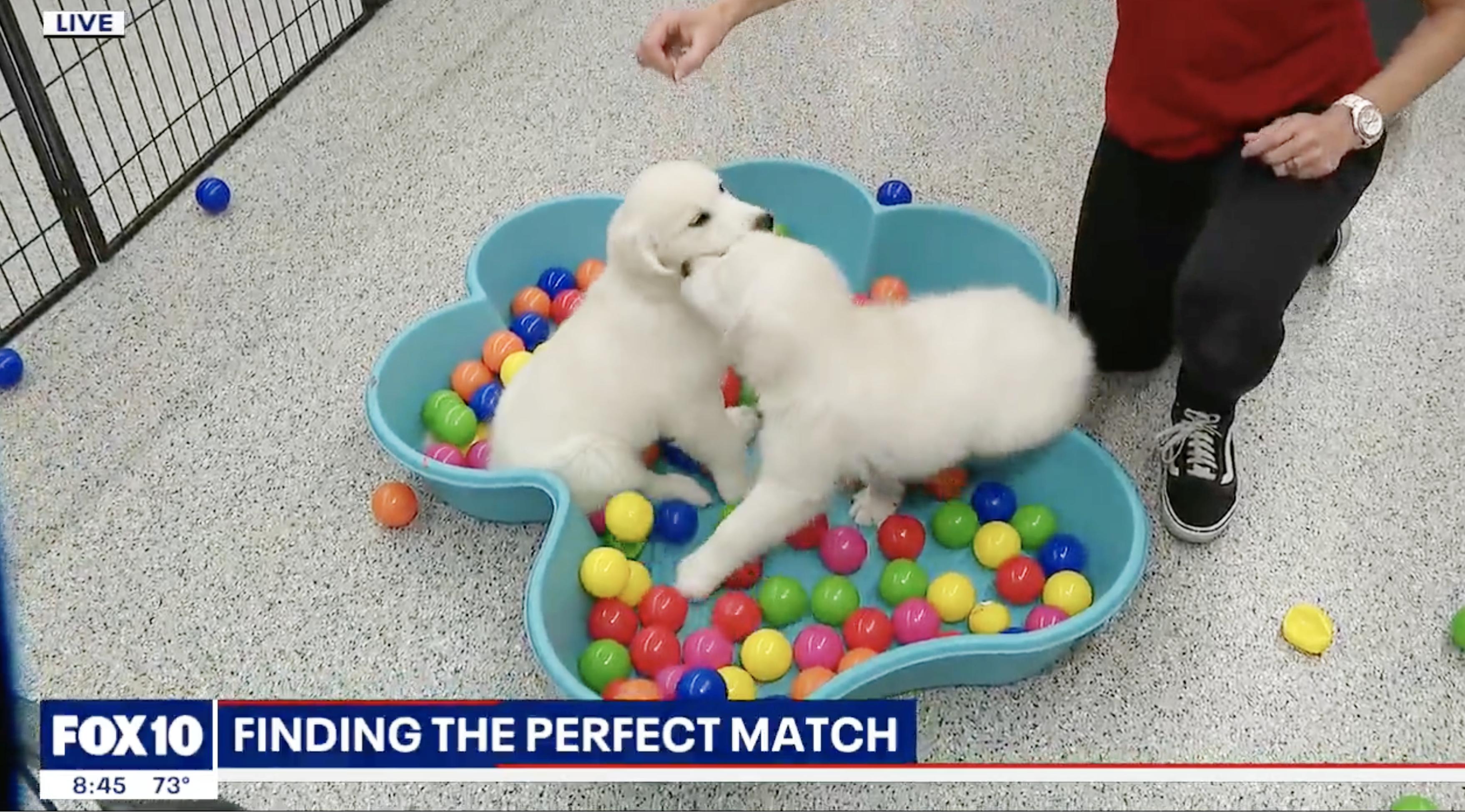 Finding the perfect pet match Puppies Animal Kingdom Arizona