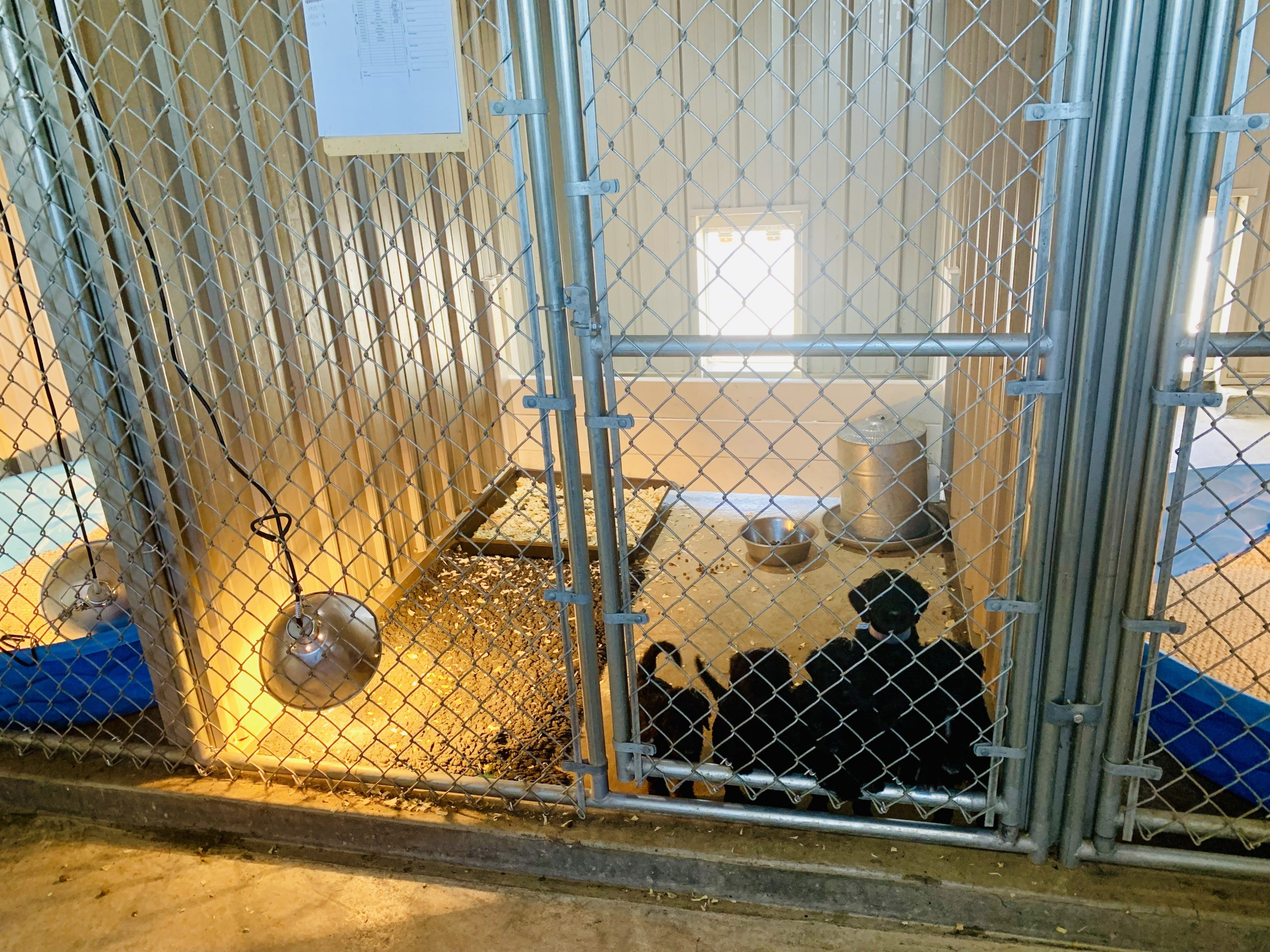 An interior view of Megan's kennel
