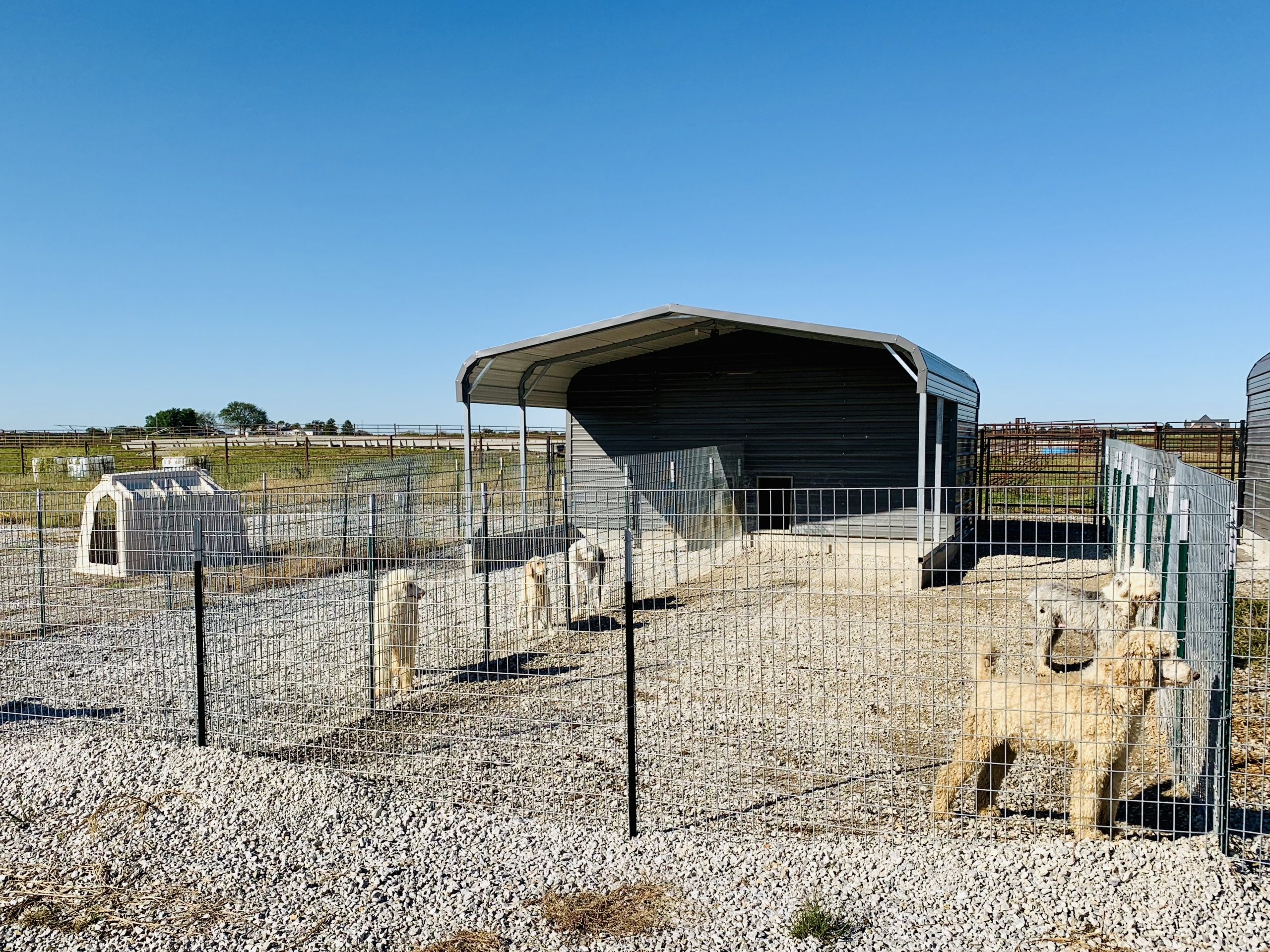 A view of Megan's kennel