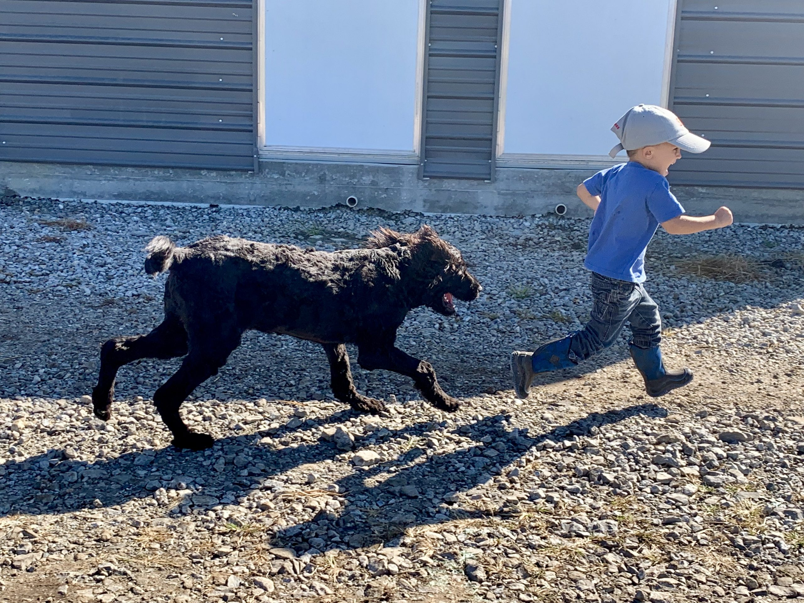 One of Megan's kids playing with an adult dog