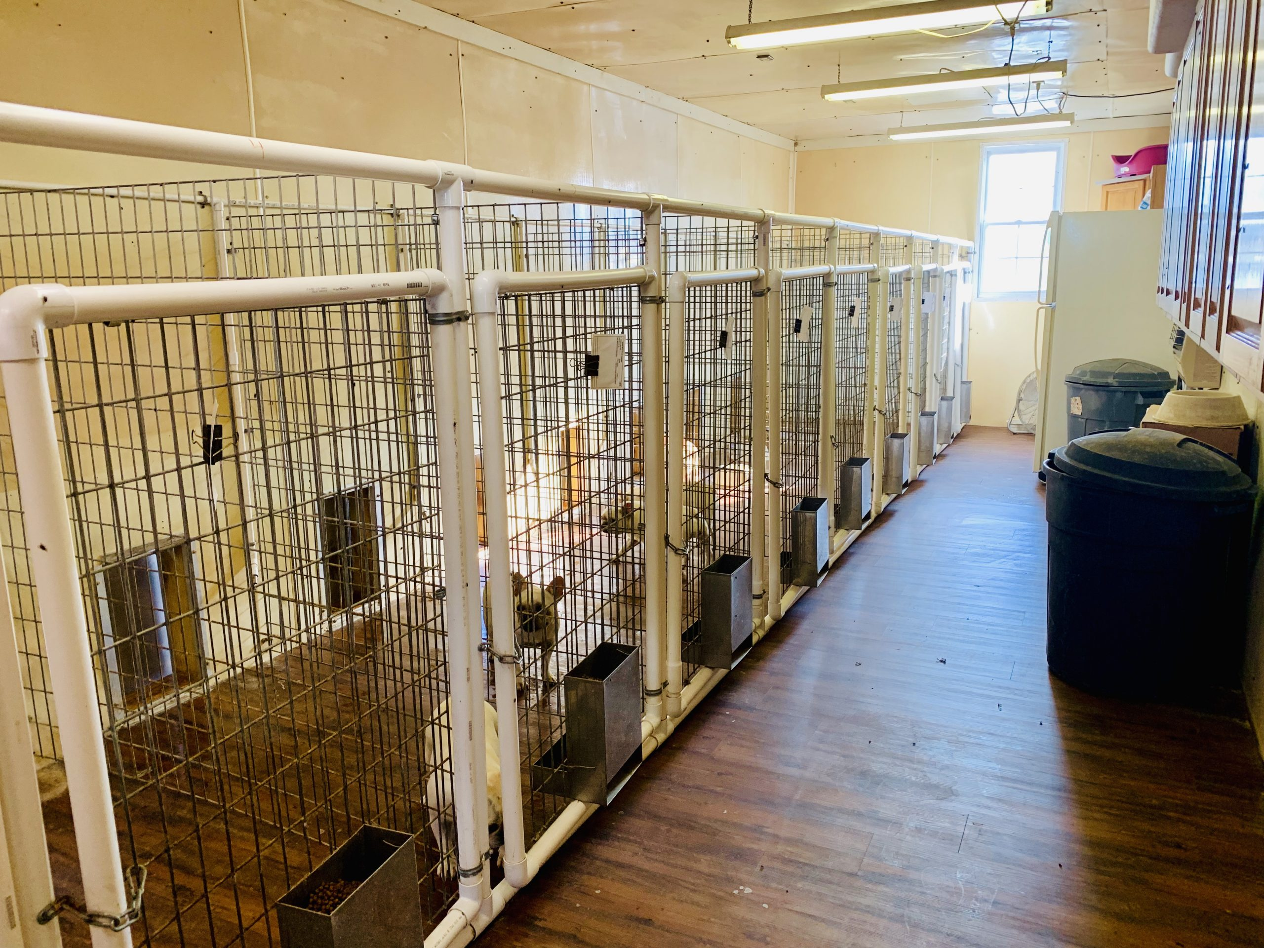 Interior view of Kim's kennel