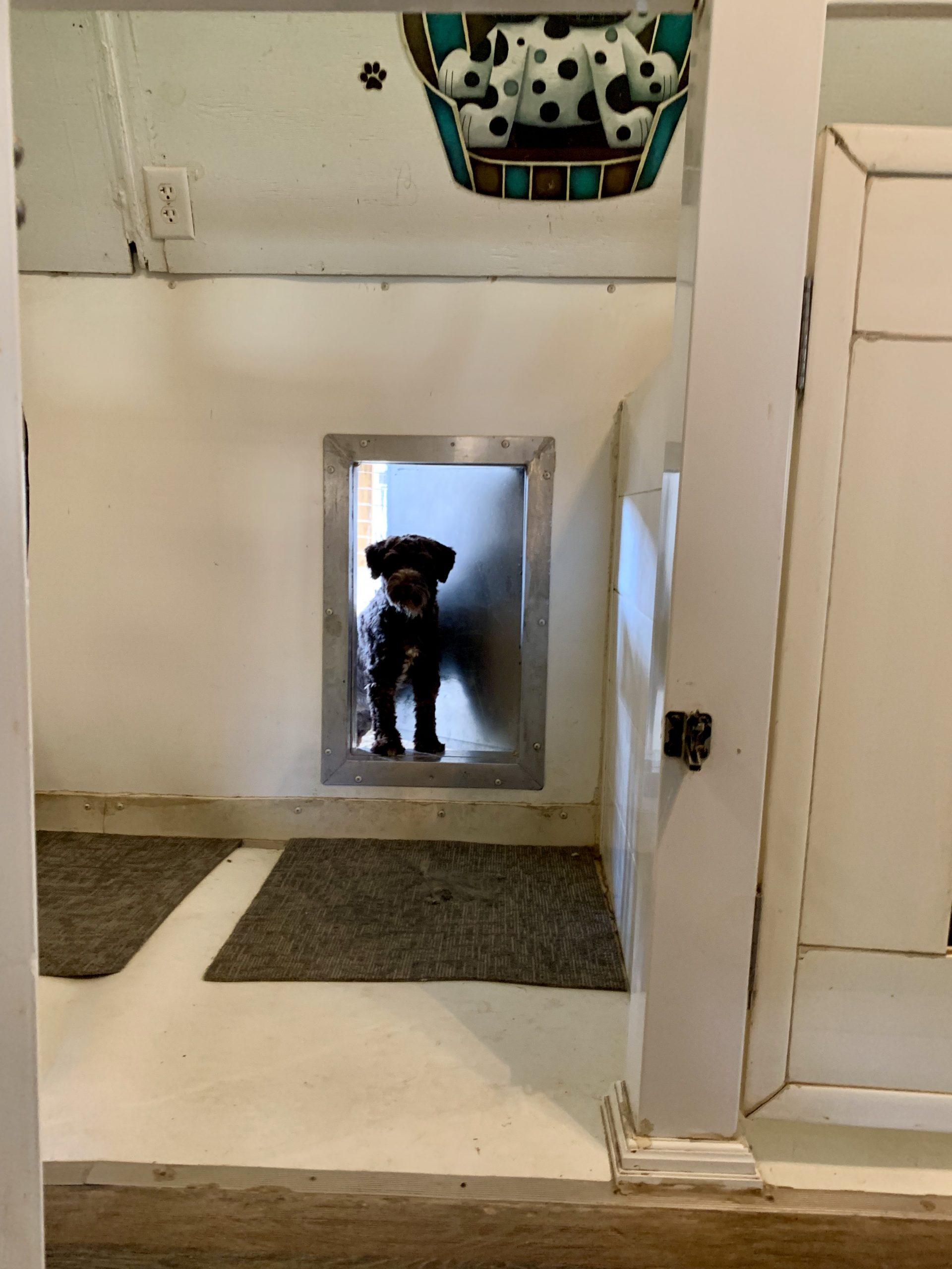 Adult dog looking through doggy door