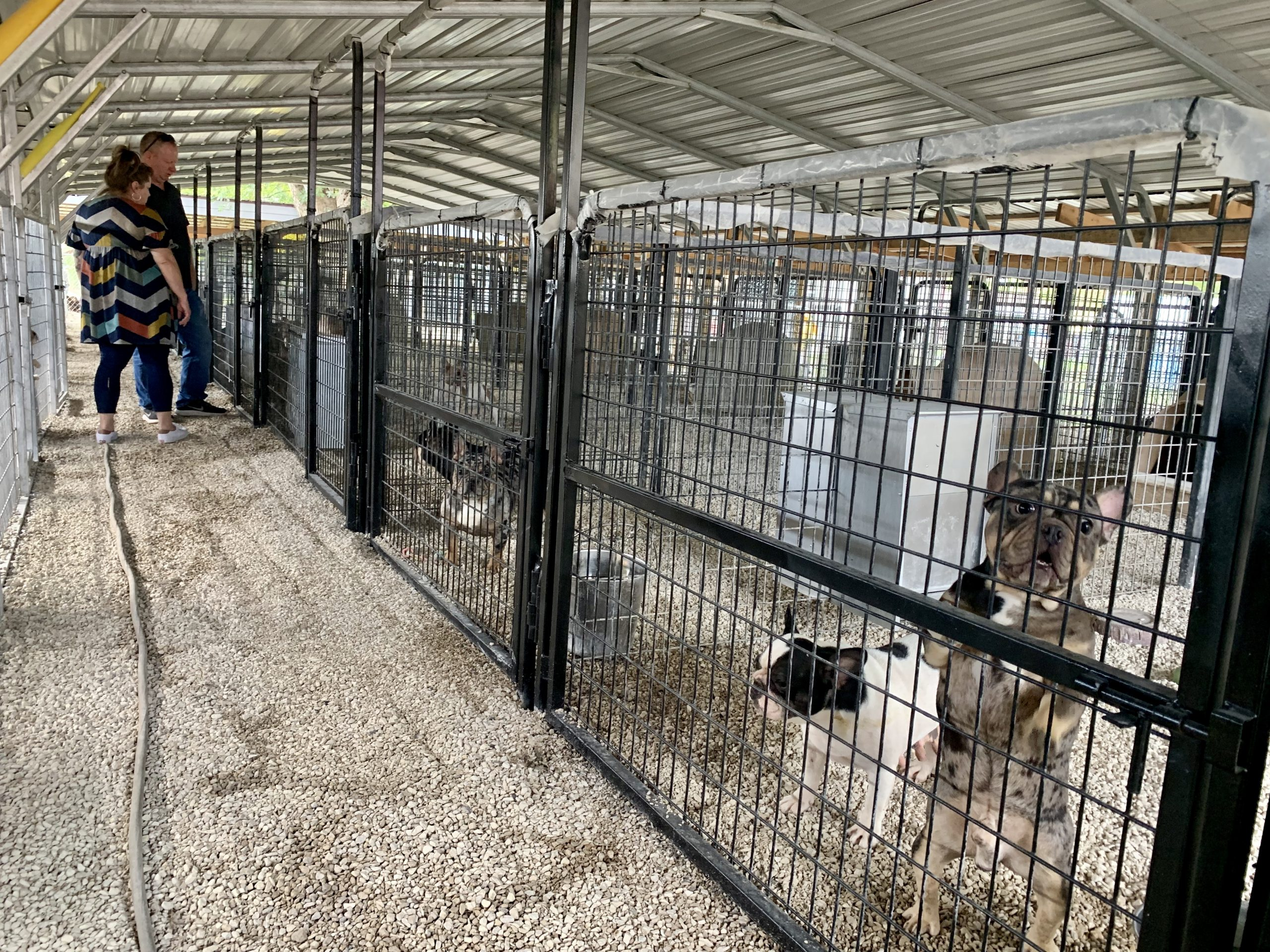 A view of Becky's kennels