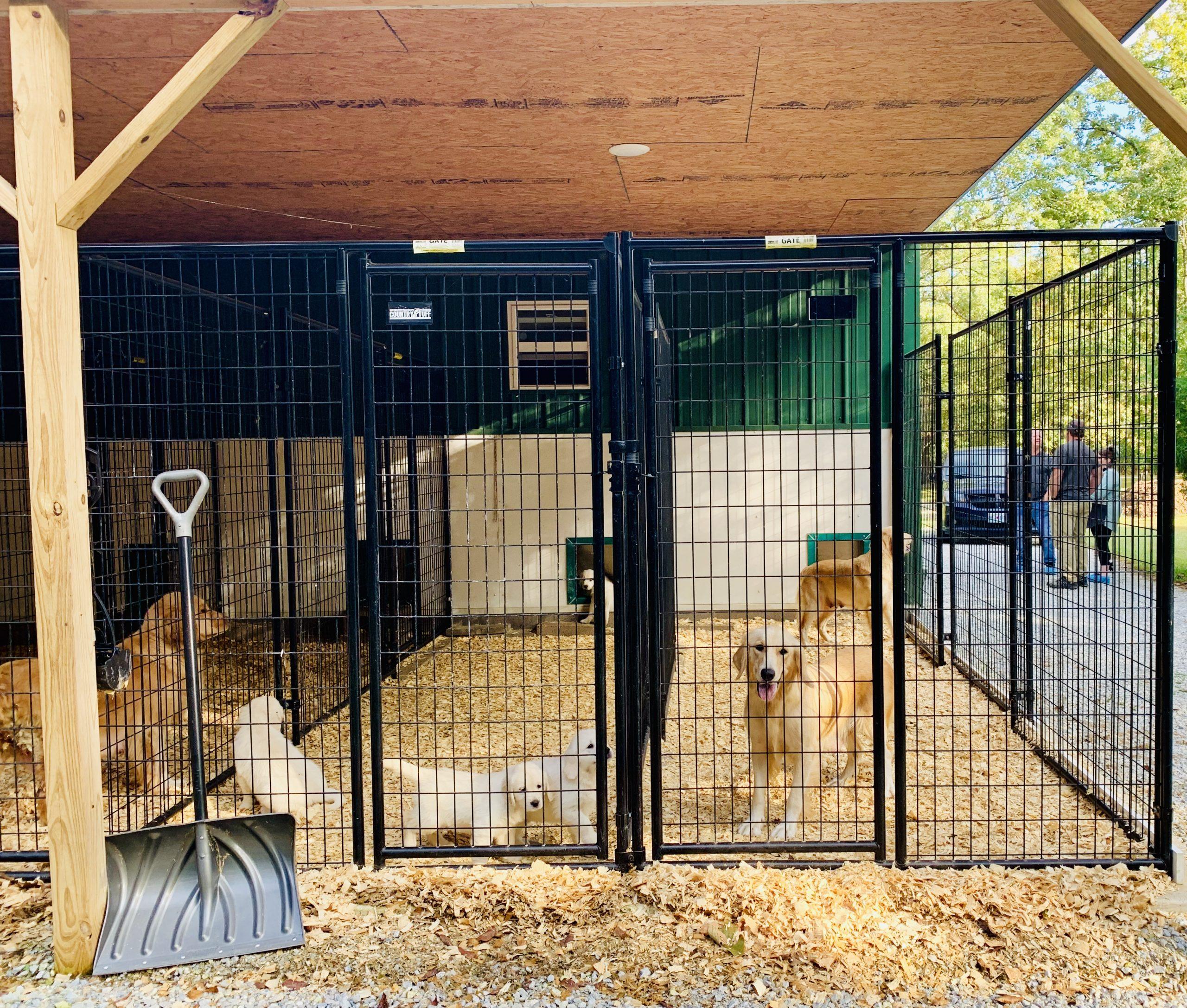 Dogs in kennels
